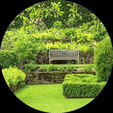 Bench in a green garden