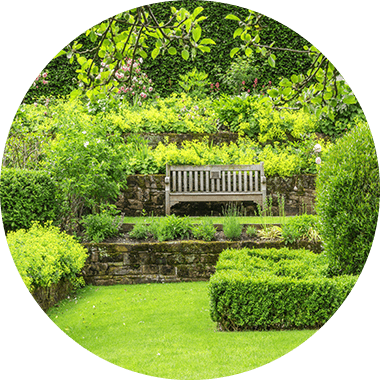 Bench in a green garden