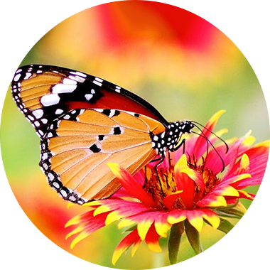 Close up of a butterfly on a flower
