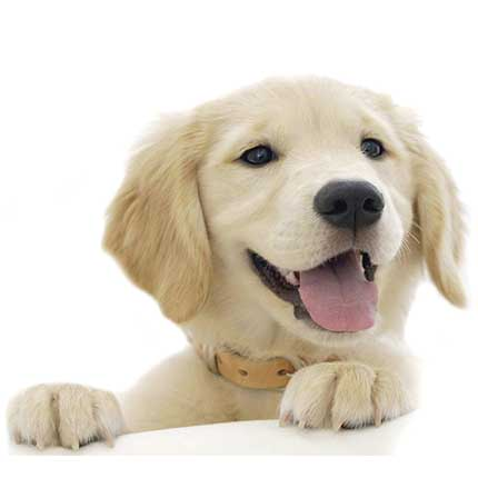 Tienda Pet, Pet shop - Perros