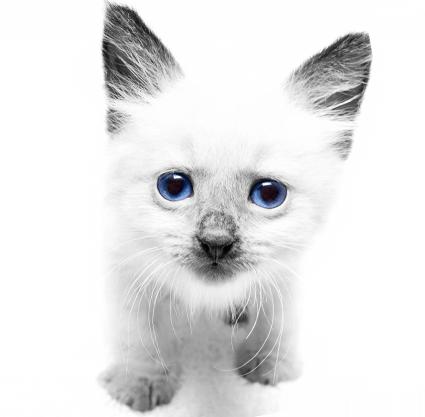 Tienda Pet, Pet Shop - Gatos